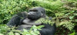 7 Days Rwanda gorilla trekking & cultural experience