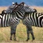 Kidepo National Park - Uganda
