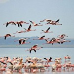 Lake-Nakuru-National-Park-Kenya Bird watching