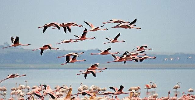 LAKE NAKURU NATIONAL PARK AT A GLANCE – Kenya