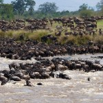 Masai Mara The Great Migration National Park