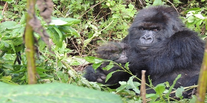 8 DAYS Visit Burundi Nature – Culture and Track GORILLAS in Rwanda