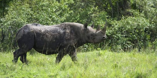 Aberdare Natonal Park – Kenya