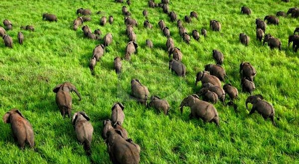 Garamba National Park in DRCongo