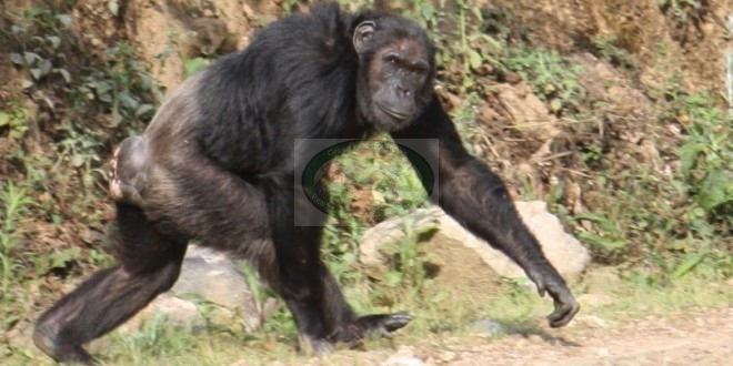 6 Days Rwanda Great Apes and Biking Expedition