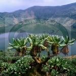 Bisoke Volcano trekking