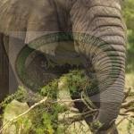 Visit Akagera wildlife