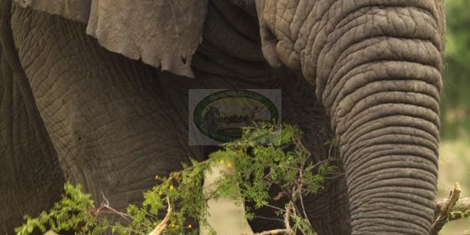 2 Days Visit Akagera National Park –  Rwanda wildlife safari