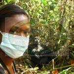 Encounter Lowland Gorillas in DRC