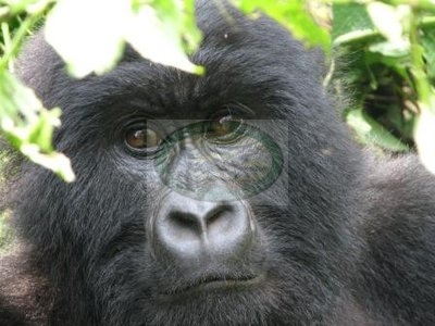 Virunga National Park In D.RCongo