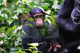 kibale national park – uganda