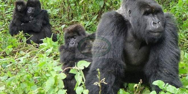 Mgahinga Gorilla National Park– uganda