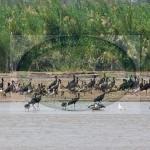 Rusizi National Park Bujumbura Burundi Vacation