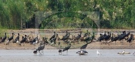 2 Days Birds watching tour, Livingstone Monument, Rusizi national park