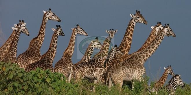 Arusha National Park – Tanzania