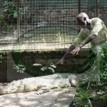 Innocent playing with Crocodile