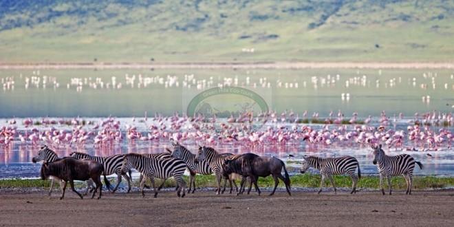 Lake Manyara National Park – Tanzania