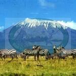 Mt Kilimanjaro-Tanzania