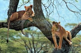 RUAHA NATIONAL PARK – TANZANIA