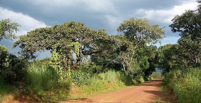 RUVUBU NATIONAL PARK – BURUNDI